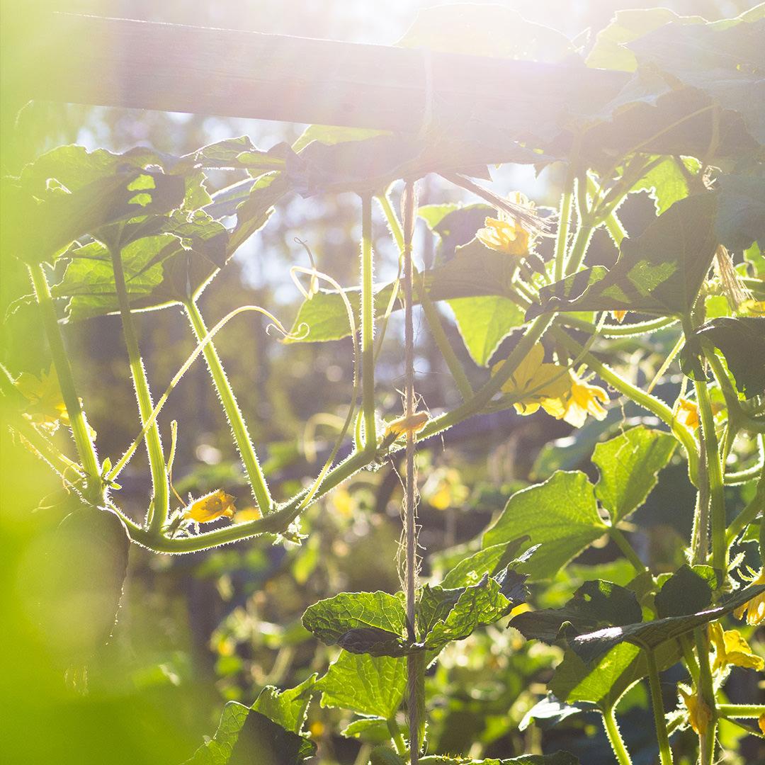 Photographie d'un jardin du Festival international de jardins - Studio Paysage - Page Projets - Jardins de Métis